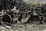 Gagliato_2174